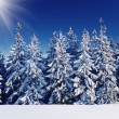 Winter landscape — Stock Photo #29209781