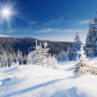 Winter landscape — Stock Photo #29209797