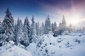 Winter — Stockfoto