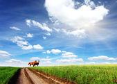 Horse — 图库照片