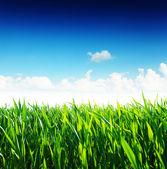 Grass — Stok fotoğraf