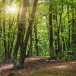 Green forest early morning. — Stock Photo