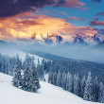 Winter — Stock Photo #31340941