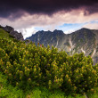 Stock Photo: National Park High Tatra