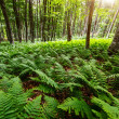 Sunlight in the green forest early morning. — Stock Photo