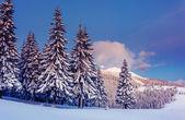 Fantastic winter landscape — Стоковое фото