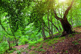 Sunlight in the green forest — Stock Photo