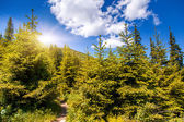 Zonnige dag is in berglandschap. — Stockfoto