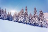 Fantastische winterlandschap — Stockfoto