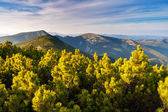 сельских альпийский пейзаж. — Стоковое фото