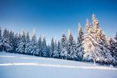 幻想的な冬の風景 — ストック写真