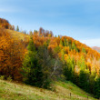 Mountain autumn landscape — Stock Photo #31456965