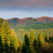 Mountain autumn landscape — Stock Photo #31457513