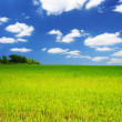 Spring green field — Stock Photo