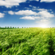 Field and sunlight — Stock Photo
