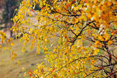 Bright colorful leaves — Stock Photo