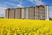 Residential building with beautiful yellow field — Stock Photo
