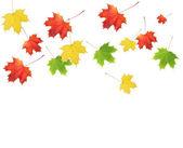 Barevné podzimní listí — Stock fotografie
