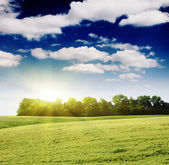 Field and sunlight in blue sky — Foto Stock