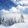 Trees covered with  snow in mountains. — Stock Photo