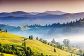 Foggy summer morning in the mountains — Stock Photo
