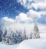 Träd täckta med snö i bergen. — Stockfoto