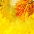 Leaves in the autumn forest. — Stock Photo