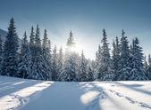 Frostiga och solig dag i bergen. — Stockfoto
