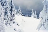 árboles cubiertos de nieve en las montañas. — Foto de Stock