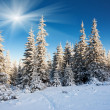 Frosty and sunny day in mountains — Foto Stock