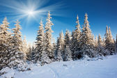 Frosty and sunny day in mountains — Stock Photo