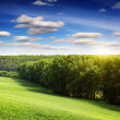 Summer field and sunlight — Stock Photo