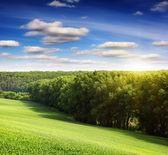Summer field and sunlight — Stock Photo