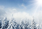 Trees covered with hoarfrost in mountains. — Stock Photo