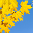 Colorful leaves on the branches — Stock fotografie