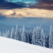 Winter day in mountains — Stock Photo