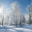 Winter landscape with snow — Stock Photo