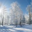 Paesaggio invernale con neve — Foto Stock