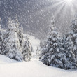 Winter fir in mountains. — Stockfoto