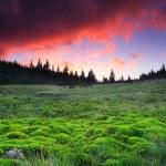 krásné ráno — Stock fotografie