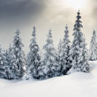 Trees covered with hoarfrost — Stockfoto