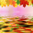 Autumn leaf — Stock Photo #31739909