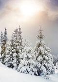 árboles cubiertos de escarcha en las montañas. — Foto de Stock