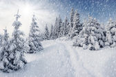 Bomen bedekt met rijm in bergen. — Stockfoto