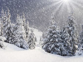 Winter fir in mountains. — Stock Photo