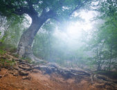 Forest in the early morning — Stock Photo