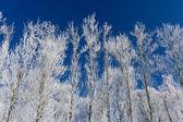 Mooie winterlandschap — Stockfoto