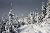 Träd täckta med rimfrost i bergen. — Stockfoto