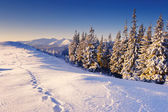 Winter day is in mountains — Stock Photo