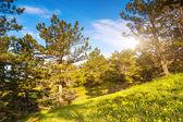 Tag in berglandschaft — Stockfoto